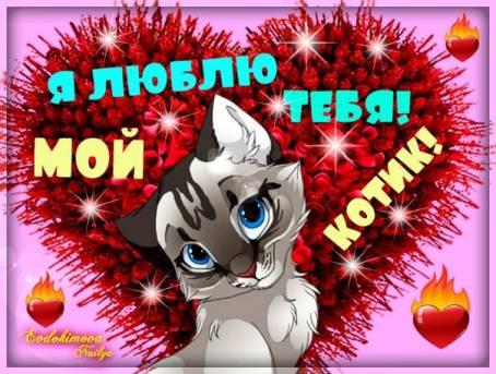 Картинка - Я люблю тебя! Мой котик!