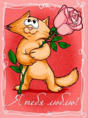 Картинка с котиком - Я тебя люблю!