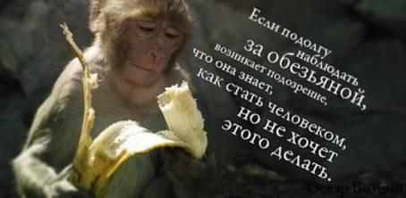 """Цитата: """"Если подолгу наблюдать за обезьяной..."""