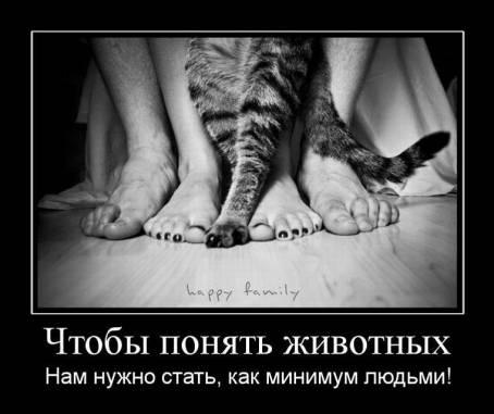 Демотиватор - Чтобы понять животных...