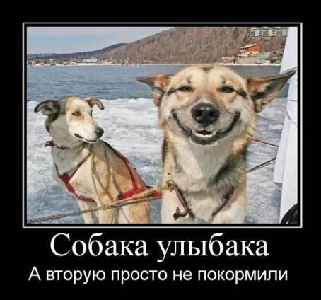 Демотиватор - Собака улыбака