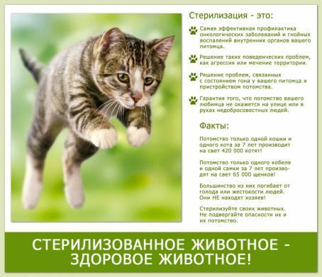 О стерилизации животных