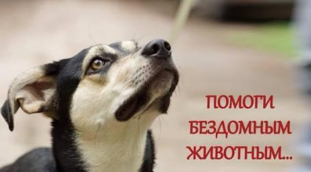 Картинка - Помоги бездомным животным...