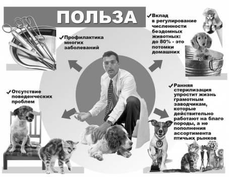 Польза стерилизации животных