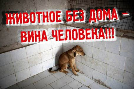Животное без дома - вина человека