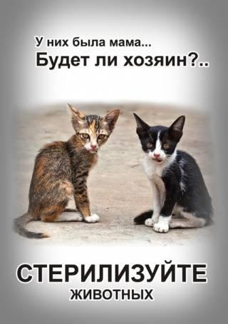 Картинка - Стерилизуйте животных