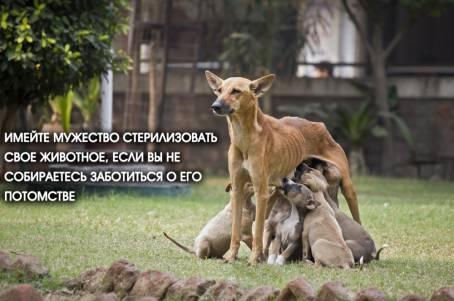 Имейте мужество стерилизовать свое животное