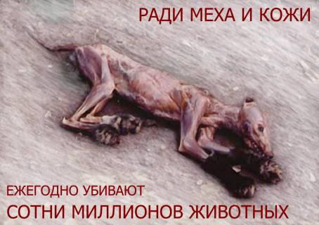 Ради меха и кожи ежегодно убивают сотни миллионов