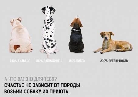 Картинка - Возьми собаку из приюта