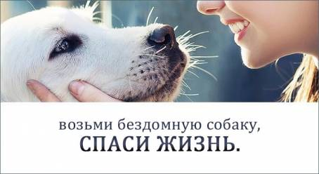 Картинка - Возьми бездомную собаку, спаси жизнь!