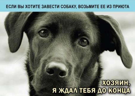 Картинка - Возьмите собаку из приюта