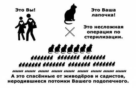 Картинка о стерилизации животных