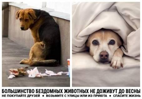 Большинство бездомных животных не доживут до весны