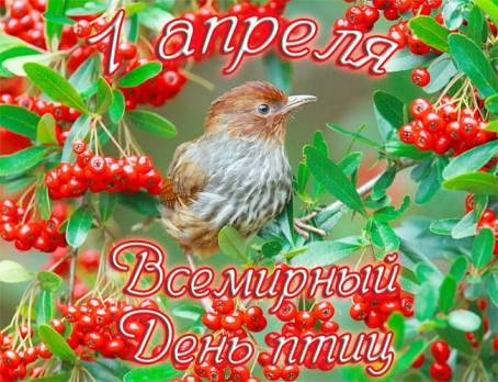 Картинка - Всемирный День птиц