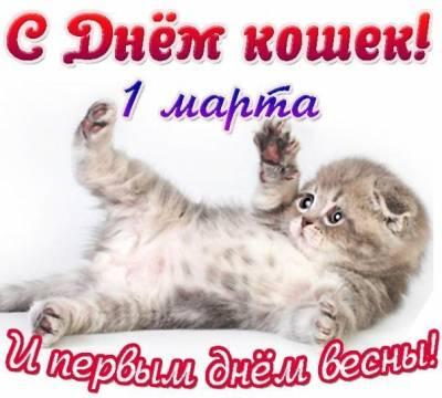 Картинка - С Днем кошек!