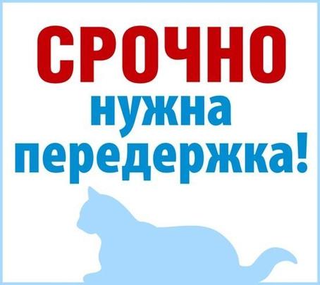 Картинка с кошкой - Срочно нужна передержка!