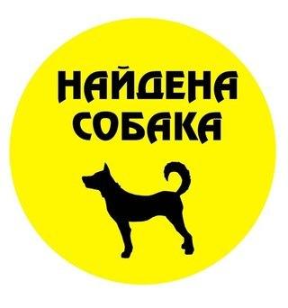 Картинка - Найдена собака