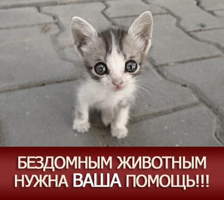 Картинка - Бездомным животным нужна ваша помощь!!!