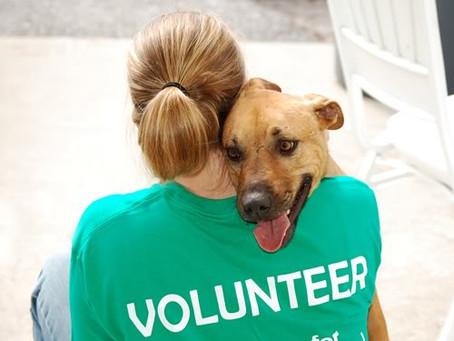 Картинка - Волонтер с собакой