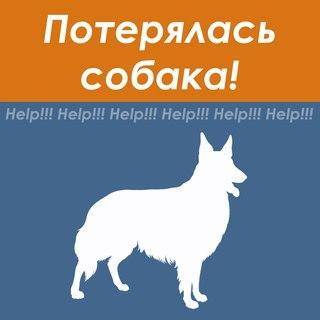 Картинка - Потерялась собака!