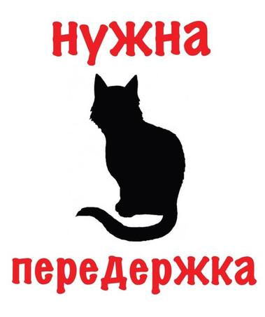Картинка с кошкой - Нужна передержка
