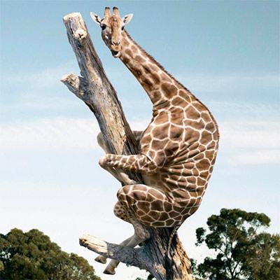 Прикольная картинка с жирафом на аватар