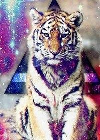 тигры фото на аву