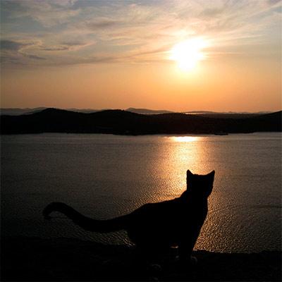 Красивое фото на аватар - Силуэт кошки на закате