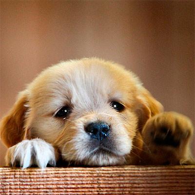Красивое фото на аватар - Щенок