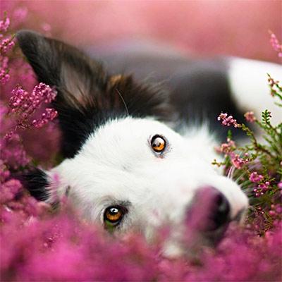 Красивое фото на аватар - Собака в цветах