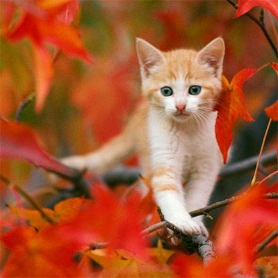 Красивое фото на аватар - Рыжий котенок