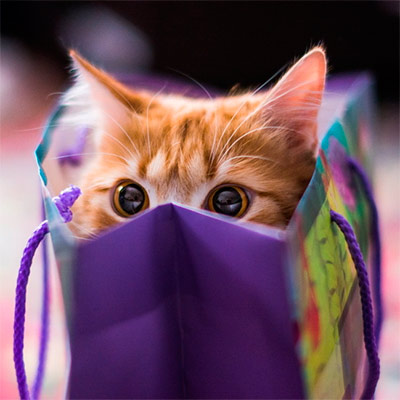 Красивое фото на аватар - Рыжий котик