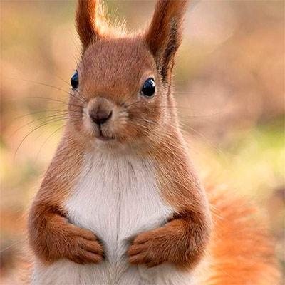 Красивое фото на аватар - Белка