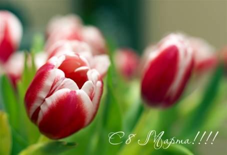 Открытка с тюльпанами к 8 Марта
