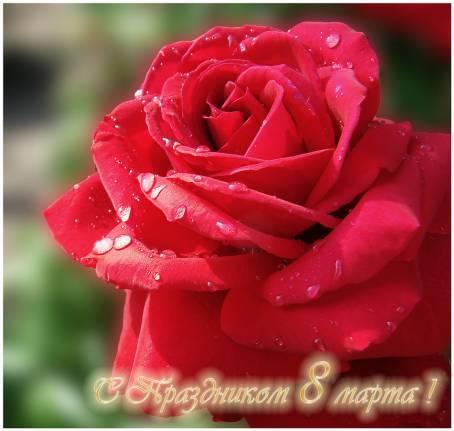 Картинка с алой розой - С 8 Марта!