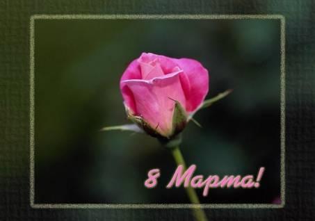 Поздравительная картинка с розой - С 8 Марта!