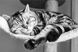 корм для котов сухой